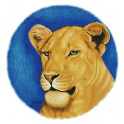 Lion Drawings Framed Prints - Prideful Glance Framed Print by Sheryl Unwin