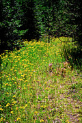 Trails Prints - Priest Lake Trail Series IV - Small Meadow Print by David Patterson