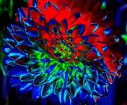 Blooming Digital Art - Primary Colors by David Lee Thompson