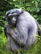 Primate Print by Jen Morrison