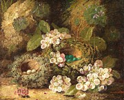 Birds And Flowers Posters - Primroses and Birds Nests on a Mossy Bank Poster by Oliver Clare