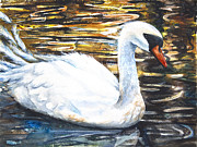 Sparkling Mixed Media Framed Prints - Prince of Swans Framed Print by Patricia Allingham Carlson