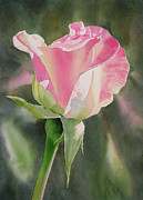 Pink Rose Posters - Princess Diana Rose Bud Poster by Sharon Freeman