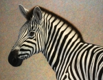 Zebra Art - Principled by James W Johnson