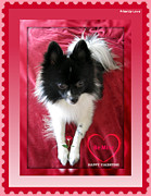 Cute Puppy Pictures Photos - Priority Love Stamp Happy Valentine Day by John A Shiron