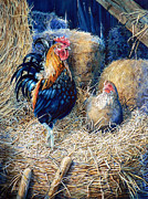 Hay Bale Framed Prints - Prized Rooster Framed Print by Hanne Lore Koehler