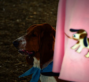 Basset Framed Prints - Profile in Pink Skirt  Framed Print by Steven  Digman