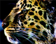 Jaguars Framed Prints - Profile of a jaguar Framed Print by Nick Gustafson