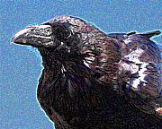 Wingsdomain Mixed Media - Profile of a Raven . Digital Interpretation by Wingsdomain Art and Photography