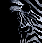 White On Black Posters - Profile of Zebra Poster by Natasha Denger