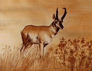 Pacific Northwest Painting Posters - Pronghorn Antelope Poster by Cindy Wright