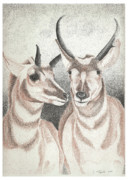 Stippling Originals - Pronghorns by Lawrence Tripoli