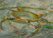 Blue Crab Paintings - Propa Blue crab by Sibby S