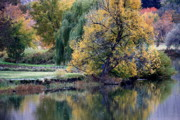 Weeping Willow Photos - Prosser - Autumn Reflection with Geese by Carol Groenen
