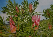 Fynbos Prints - Proteas 2 Print by Caren Bestbier