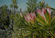 Fynbos Prints - Proteas Print by Caren Bestbier