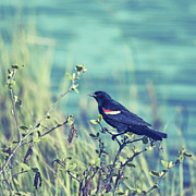 Bird Photographs Metal Prints - Protective Metal Print by Aimelle
