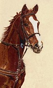 Watercolor. Equine. Bridle Prints - Proud - Portrait of a Thoroughbred Horse Print by Patricia Barmatz