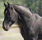 Connie Moses Art - Proud Black Stallion- Oil Portrait by Connie Moses