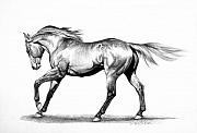 Thoroughbred Drawings - Proud by Howard Dubois
