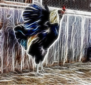 Flower Photographs Mixed Media Prints - Proud Rooster Print by Kami McKeon