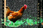 Eating Mixed Media - Provence French Rooster Print by adSpice Studios