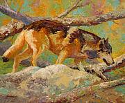 Western Prints - Prowler - Grey Wolf Print by Marion Rose