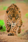 Hunger Mixed Media Posters - Prowling Leopard Poster by Jerry L Barrett