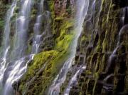 Nature Posters - Proxy Falls Poster by Leland Howard