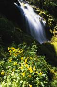 Fall River Scenes Prints - Proxy Falls Print by Natural Selection Craig Tuttle