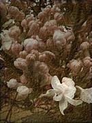Pruning Lilacs Print by Lianne Schneider