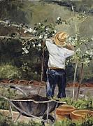 Pruning Paintings - Pruning Time in Umbria by Shari Jones