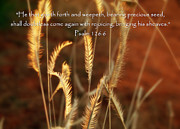 Scriptural Posters - Psalm 126 6 Grain Poster by Cindy Wright