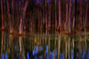 The Swamp Prints - Psychedelic Swamp Trees Print by Susanne Van Hulst