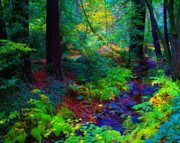 Marin County Digital Art Prints - Psychedelicosmic Creek on Mt Tamalpais Print by Ben Upham