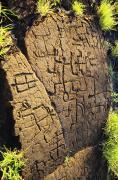 Archaeological Photos - Puako Petroglyphs by Mary Van de Ven - Printscapes