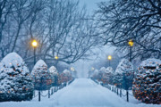 Winter Prints - Public Garden Walk Print by Susan Cole Kelly