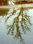 Flooding Photos - Puddle Reflections by Cindy Wright