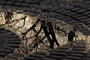 Puddle Prints - Puddle Print by Robert Ullmann