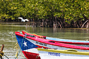 Mangrove Forest Photo Prints - Puerto Rican Fishing Boats Print by George Oze