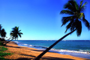 Puerto Rico Photo Prints - Puerto Rico Beach Print by Thomas R Fletcher