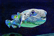 Porcupine Fish Art - Puffer Fish by Jane Schnetlage