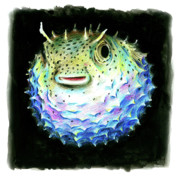 Puffer Fish Drawings - Puffer Fish by Muaviath Ali