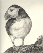 Arctic Drawings Originals - Puffin by Aurora Jenson