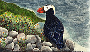 Parrot Art Mixed Media - Puffin by Wendy McKennon