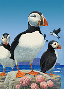 Sea Birds Paintings - Puffins by R B Davis