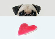Sticky Framed Prints - Pug And Heart Framed Print by Retales Botijero