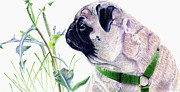 Buy Dog Prints Drawings - Pug and Nature by Patricia Barmatz