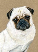 Dog Lover Drawings Posters - Pug Portrait Poster by Heather Mitchell