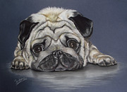 Cute Dogs Pastels - Pug What a cutie by Irisha Golovnina